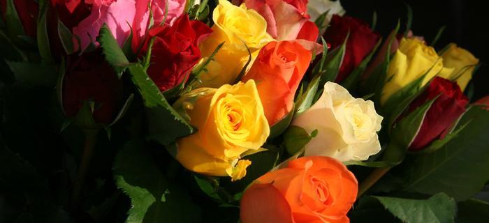 róże dzień kobiet